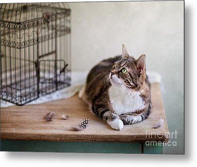 Cat And Bird Cage Metal Print