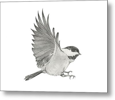 Chickadee Outstretched Metal Print by Christopher Hughes