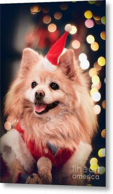 Christmas Dog Metal Print