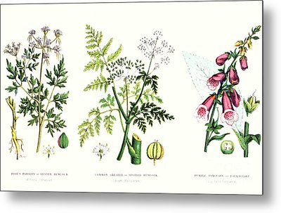 Common Poisonous Plants Metal Print