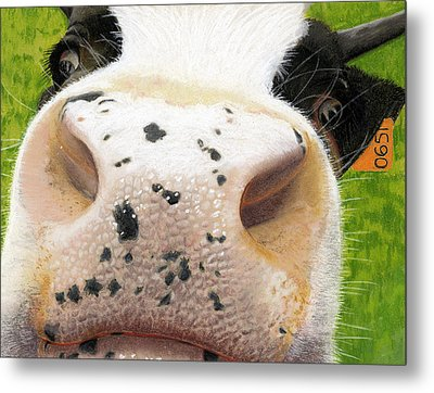 Cow No. 0651 Metal Print by Carol McCarty