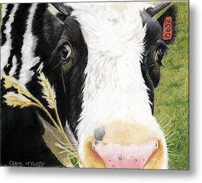 Cow No. 0652 Metal Print by Carol McCarty