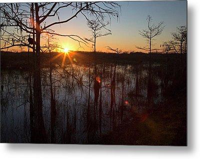 Cypress Swamp At Sunrise Metal Print by Jim West