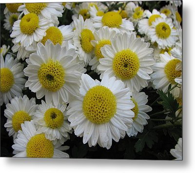 Daisy Like Flowers 1 Metal Print