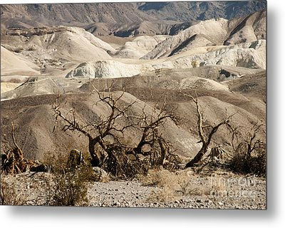 Death Valley Metal Print by Juli Scalzi