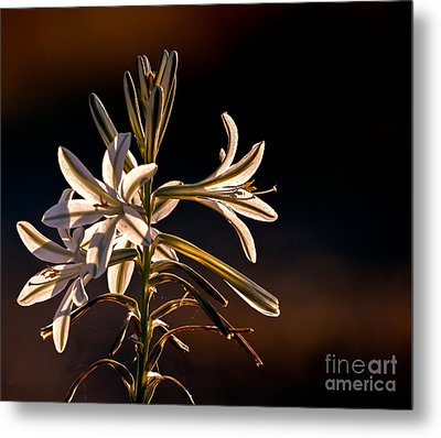 Desert Easter Lily Metal Print by Robert Bales