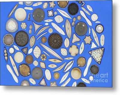 Diatoms Metal Print by Kent Wood