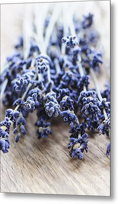 Dried Lavender Metal Print by Elena Elisseeva