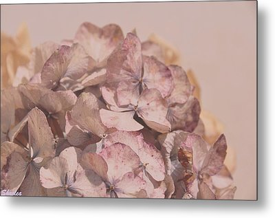 Dried Softness Metal Print
