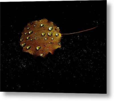 Drops On Autumn Leaf Metal Print