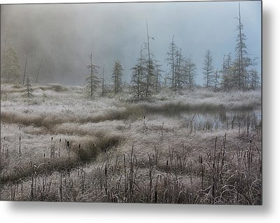 Early Morning Mist Over A Small Pond Metal Print