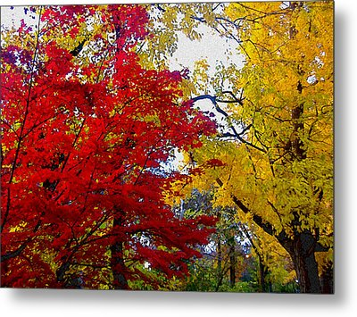 Fall Leaves Metal Print by Ariane Moshayedi