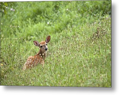Metal Print featuring the photograph Fawn by Jeannette Hunt