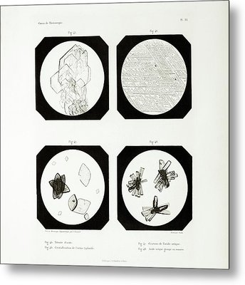 First Ever Photomicrographs Metal Print by British Library