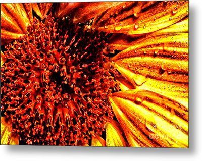 Flower Petals And Dewdrops Metal Print by Thomas R Fletcher