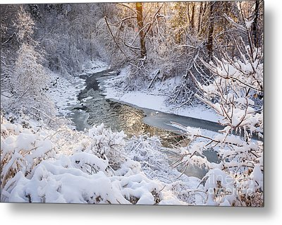Forest Creek After Winter Storm Metal Print by Elena Elisseeva