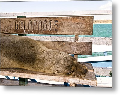 Galapagos Sea Lion Metal Print