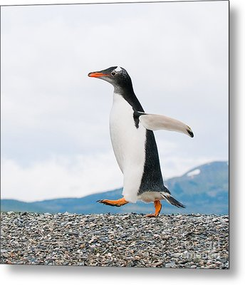 Gentoo Penguin Metal Print by Konstantin Kalishko