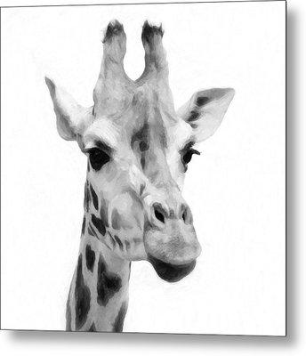 Giraffe On White Background  Metal Print