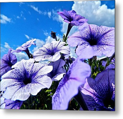 Glorious Morning Metal Print
