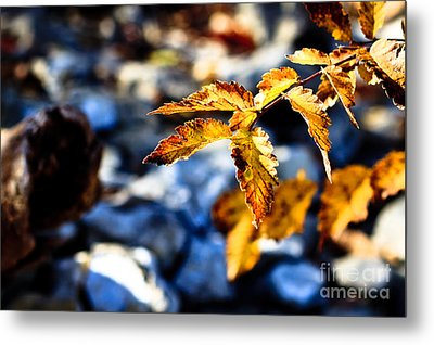 Golden Leaves Metal Print by Lawrence Burry