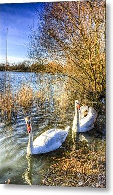 Graceful Swans Metal Print by David Pyatt