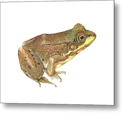 Green Frog Metal Print by Cindy Hitchcock
