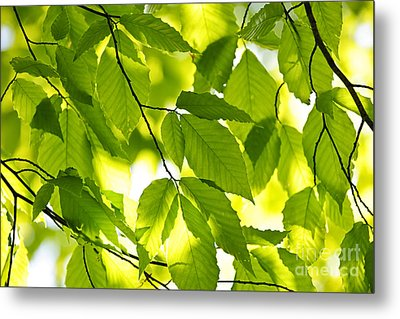 Green Spring Leaves Metal Print