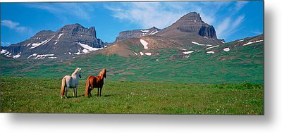 Horses Standing And Grazing In A Metal Print by Panoramic Images