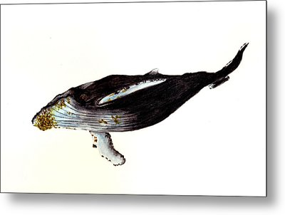 Humpback Whale Metal Print by Michael Vigliotti