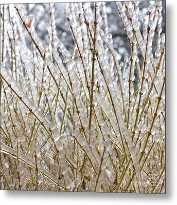 Ice On Branches Metal Print by Blink Images