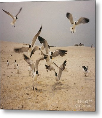In Flight Metal Print by Mj Petrucci