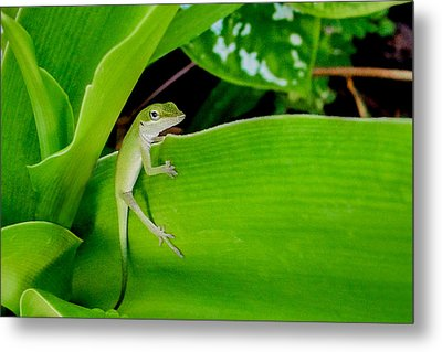 It's Easy Being Green Metal Print by TK Goforth