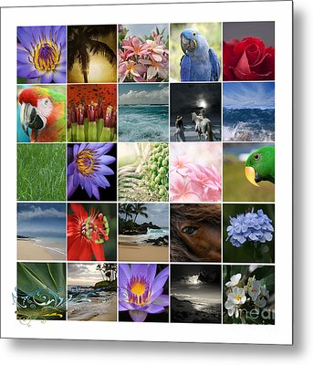 Journey Of Discovery Metal Print by Sharon Mau