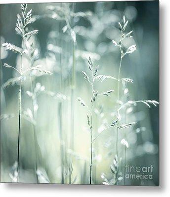 June Green Grass Flowering Metal Print