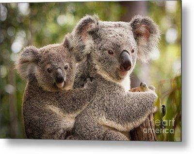 Koala And Joey Metal Print