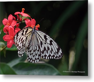 Large Tree Nymph Butterfly Metal Print
