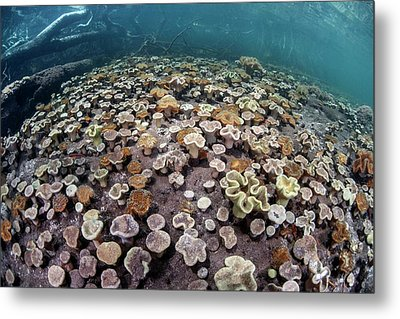 Leather Corals Metal Print by Ethan Daniels