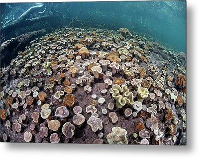 Leather Corals Metal Print