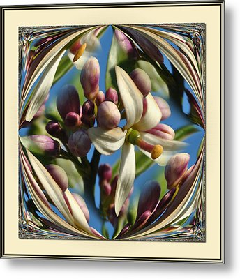 Lemon Tree Flower  Metal Print by Michele Kaiser