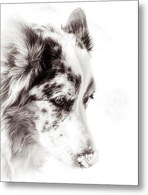 Maggie Metal Print by Cathy Donohoue