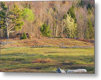 Maine Blueberry Field In Spring Metal Print