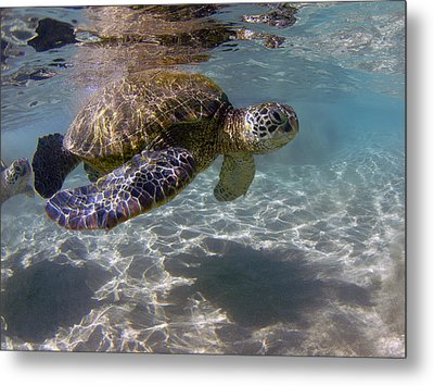 Maui Turtle Metal Print by James Roemmling