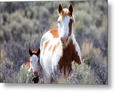 Momma And Baby In The Wild Metal Print by Athena Mckinzie