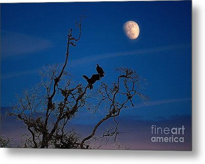 Moonrise Perch Metal Print by Erica Hanel