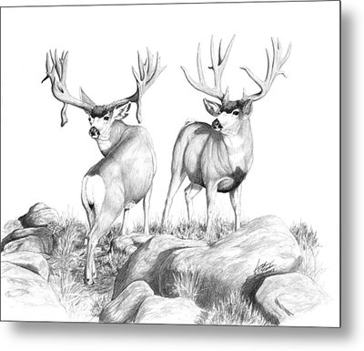 2 Muley Bucks Metal Print