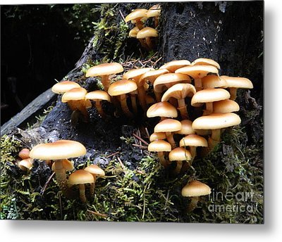 Metal Print featuring the photograph Mushrooms On A Stump by Chalet Roome-Rigdon