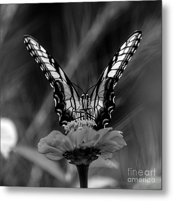 Nature Looking Glass  Metal Print by Donna Brown