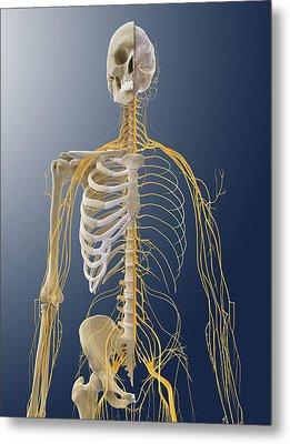 Nervous System, Artwork Metal Print