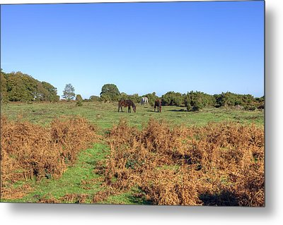 New Forest Metal Print by Joana Kruse